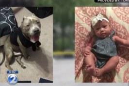 Pitbull é sacrificado depois de matar bebê de seis meses
