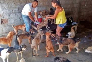 Lauro de Freitas intensifica vacinação contra raiva animal a partir desta terça, dia 3